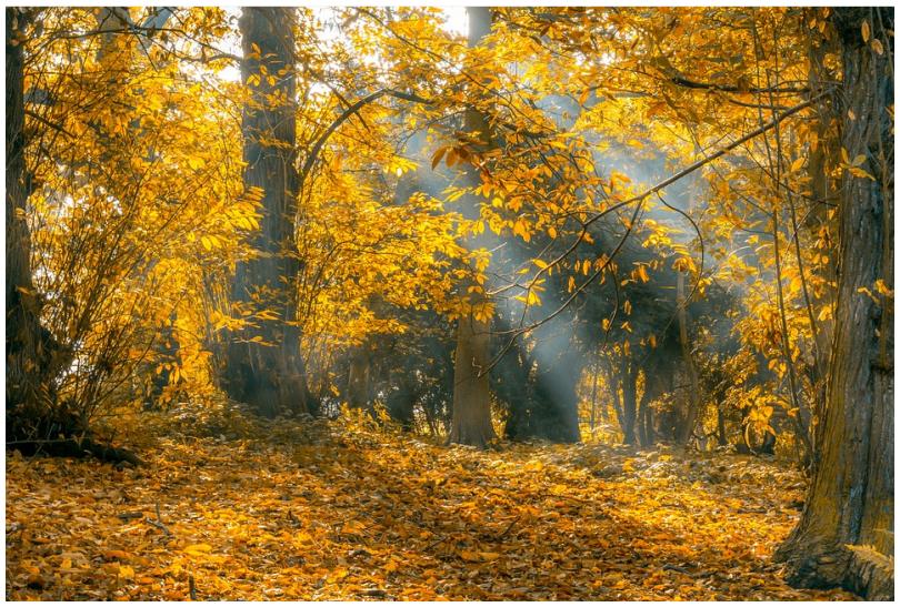 Gedicht Goldener Oktober Herbst Gedichtesammlungnet