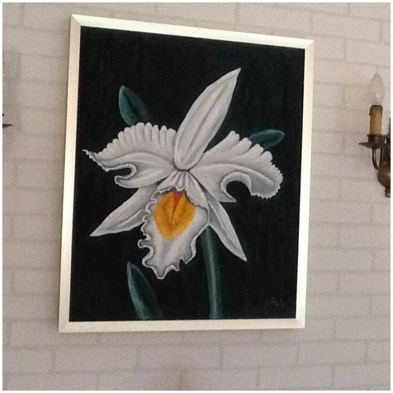 gedicht die wei e orchidee sonstige gedichte. Black Bedroom Furniture Sets. Home Design Ideas
